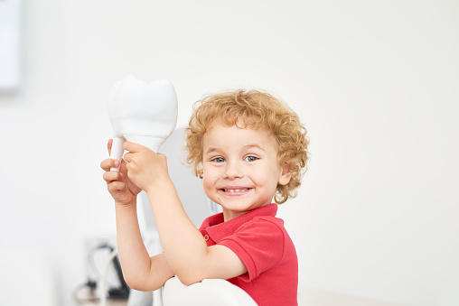 Child holding a model tooth